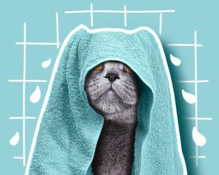 Hygiène et toilettage du chat et du chaton