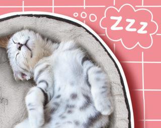 Accessoire panier couchage pour le chat