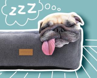 Accessoire couchage panier pour le chien