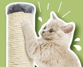 Accessoire griffoir pour le chat