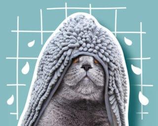 Accessoire hygiène et soins pour le chat