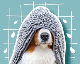 Accessoire hygiène et soins pour le chien