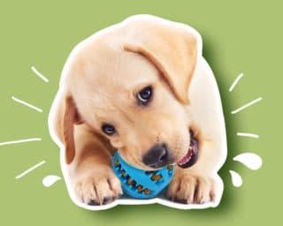 Accessoire jouet alimentaire pour le chien