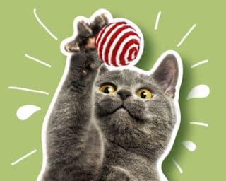 Accessoire jouet pour le chat