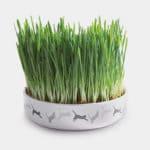 Gamelle d'herbe à chat fleuriste avec graines à semer